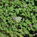 Rénostyl présente les services de toitures végétalisées