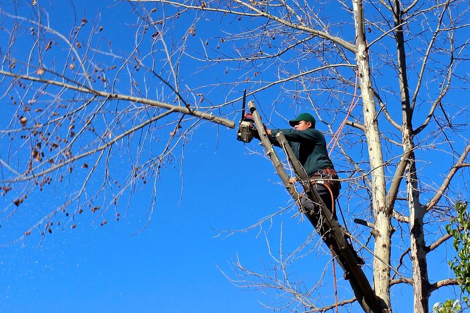 élaguer les arbres
