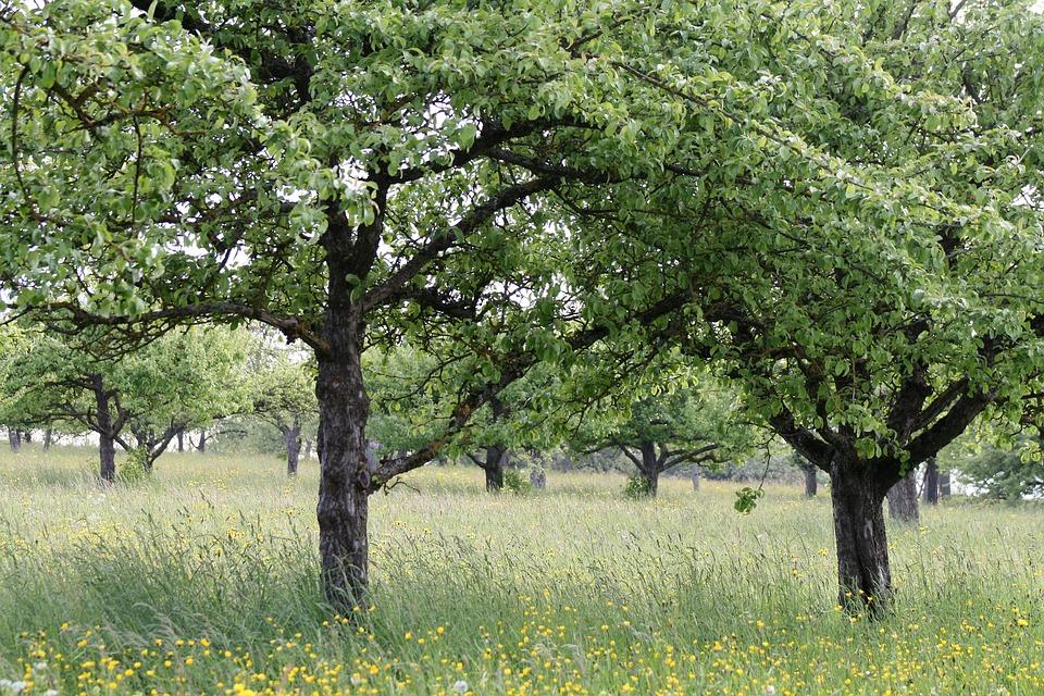 arbre frutier