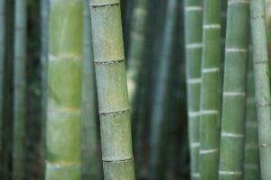 Dr Yann Guez vante les mérites écologiques du bambou
