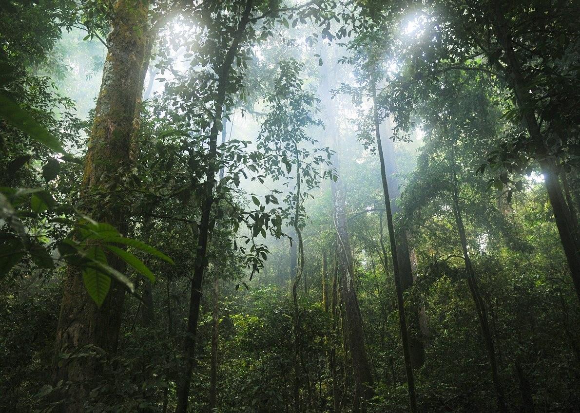 L'exploitation forestière en Afrique expliquée par Emile Ouosso