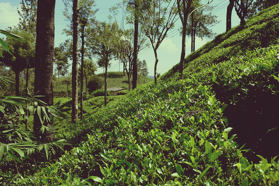 voyage ecologique sri lanka