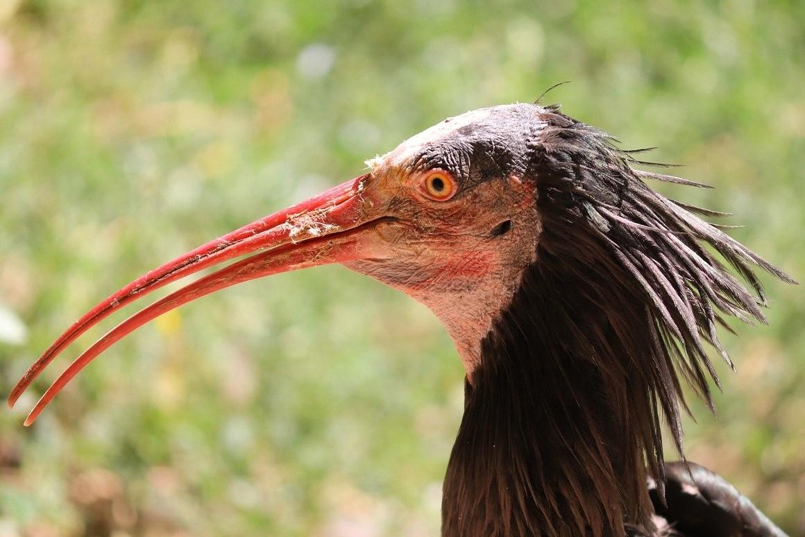 La faune sauvage en voie d'extinction dans au Moyen-Orient et en Afrique