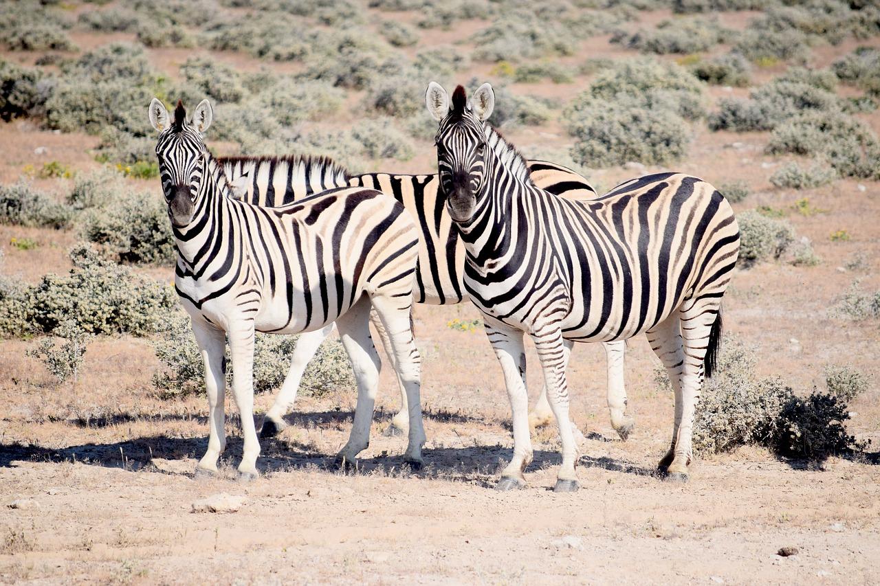 visiter la namibie